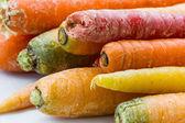 Raw carrot close-up — Foto Stock