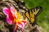 Linda borboleta — Fotografia Stock