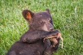 Cute black bear cub — Stock Photo