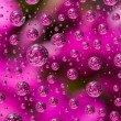 Flowers in water drops — Stock Photo #49140479