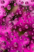 Flowers in water drops  — Stock Photo