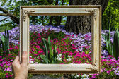 Framing a garden  — Stock Photo