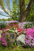 Phlox garden — Stock Photo