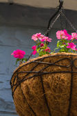 Hanging flower pot — Stock Photo