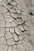 Dried mud background — Stock Photo