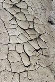 Dried mud background — Stock Photo
