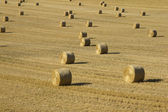 Hay in evening sunshine — Stock Photo