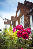 Roses in village front garden — Stock Photo