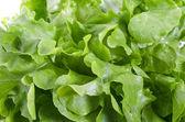 Fresh green oak salad leaves — Stock Photo