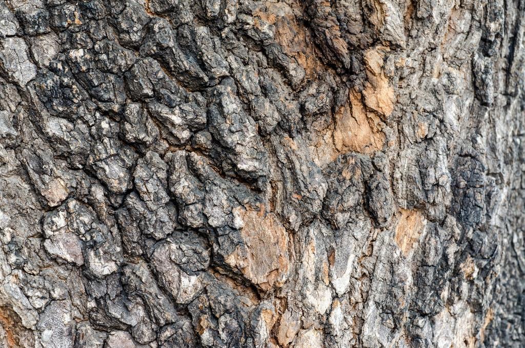 나무 껍질입니다. 자세한 텍스처 효과 프레임 작성 — 스톡 사진 ...