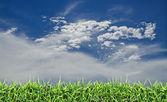 Yeşil alan, çimen, mavi gökyüzü ve beyaz bulutlar — Stok fotoğraf