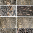 Collection of Old Wood Tree Texture Background Pattern — Stock Photo #50329025