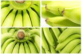 Collection of  Bunch of bananas  Macro shot — Stock Photo