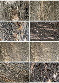 Collection of Old Wood Tree Texture Background Pattern — Foto de Stock