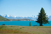 Beautiful landscape of tree, lake and snow mountain at Lake Tekapo in South Island, New Zealand — Stock Photo