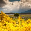 Stock Photo: Colorful of flower garden, tree and field, South Island, New Zealand