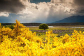 Colorful of flower garden, tree and field, South Island, New Zealand — Stock Photo