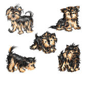 Yorkshire terriers — Stock Vector