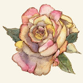 Rose illustration. — Stock Vector