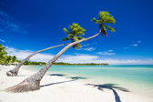 Palm trees hanging over stunning tropical lagoon — Stock Photo
