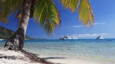 Muhteşem su ve palmiye ağaçlı tropik sahil — Stok video