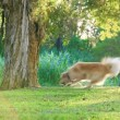 Golden retriever having fun fetching a stick in the park - Stock Photo