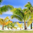 Royalty-Free Stock Vector Image: Palm trees on an amazing beach front