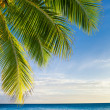 Coconut palm tree leaves over endless ocean — Stock Photo #22289073