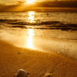 Stock Photo: Waves approaching sea shell on beach during sunset