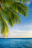 Coconut palm tree leaves over endless ocean — Stock Photo