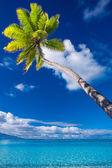 Palme auf moorea insel schwebt über der lagune — Stockfoto