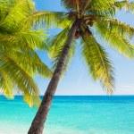 Palm trees overlooking blue lagoon — Stock Photo #45351967