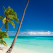 Palm trees hanging over tropical beach — Stock Photo #45352023