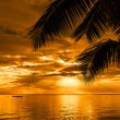 Palm trees silhouette on a beautiful beach at sunset — Stock Photo