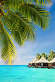 Coconut palm tree leaves over ocean with bungalows — Stock Photo