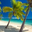 Deserted beach with coconut palm trees on Fiji — Stock Photo #45429127
