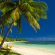 Palm trees and a white sandy beach at Fiji — Stock Photo #45429351