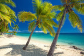 Deserted beach with coconut palm trees on Fiji — Stock Photo