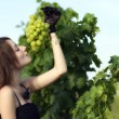 Stock Photo: Wominspecting grapes in vineyard