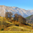 Stock Photo: Mountain autumn landscape in Bucegi Mountains, Romania