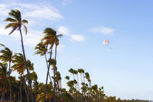 View of palm trees against sky — Stock Photo