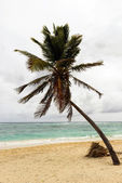 Sea and coconut palm on beach — 图库照片