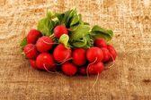 Bunch of fresh radish on the organic texture of canvas — Stock Photo
