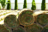 Roll grass on the ready lawn — Stock Photo
