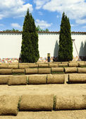 Roll grass on the ready lawn — Stok fotoğraf