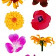 Flower Vectors — Stock vektor #12854362