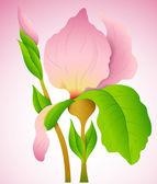 Vector illustration de fleur — Vecteur