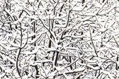 Winter Background - Snow on Tree Branches — Zdjęcie stockowe