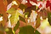 Autumn leaves — ストック写真