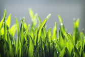 Tiny grass texture — Stock Photo